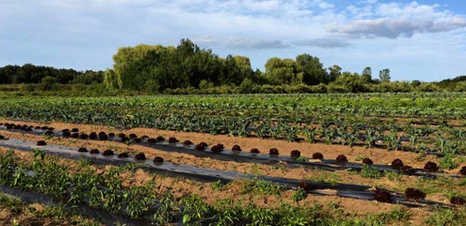 community farm in traverse city michigan
