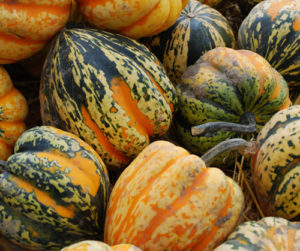 late fall seasonal produce vegetables for sale in traverse city michigan
